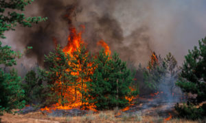 Blog - Forest-On-Fire